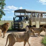 The Lion & Safari Park – a paradise for children