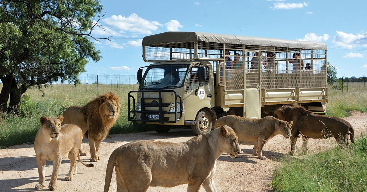 The Lion & Safari Park – a paradise for children