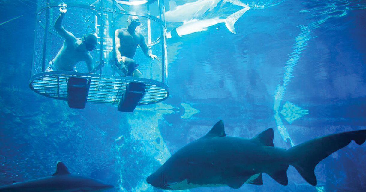 Explore uShaka's New Sea Animal Encounters