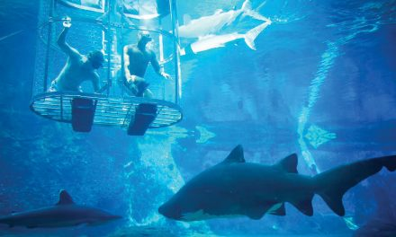 Explore uShaka's New Sea Animal Encounters