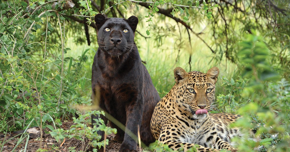 Go Wild at the Lion & Safari Park