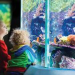 Cresta Shopping Centre announces first ever mall-based Aquarium in South Africa!