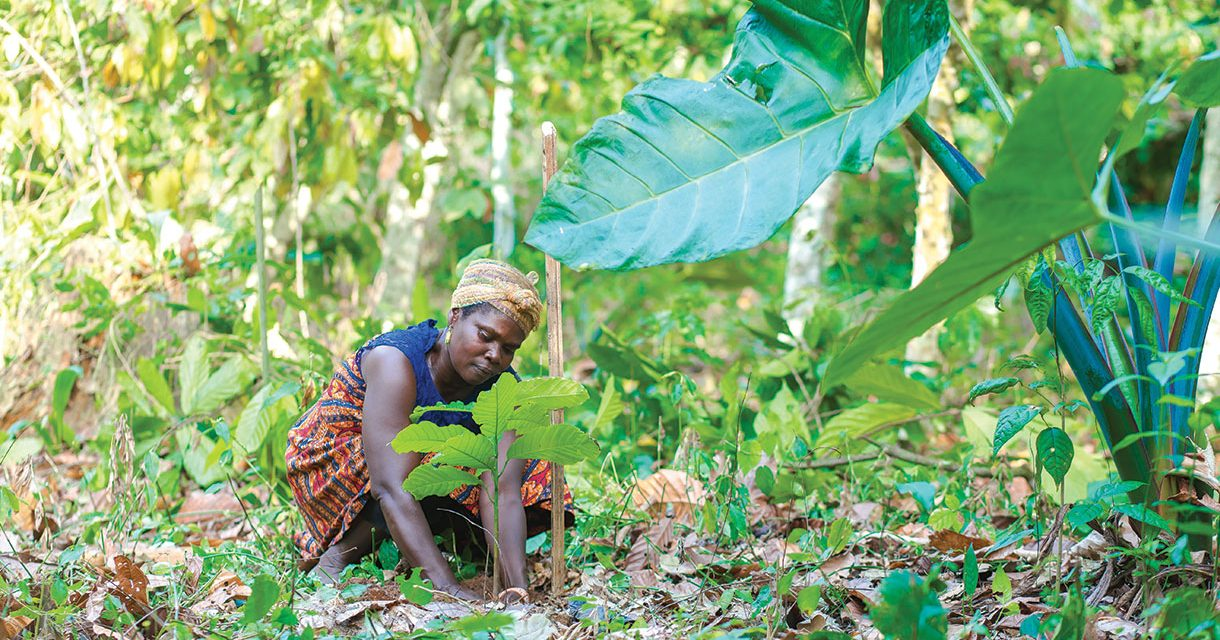 Sustainability with Cadbury Dairy Milk and Cocoa Life