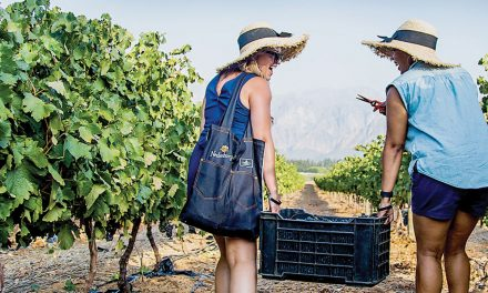 SIP, SAVOUR, SNIP AND SQUASH AT NEDERBURG'S 2020 HARVEST AT DUSK FESTIVAL